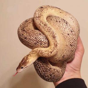 dug_cildrens_python