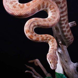 homer the stimsons python2