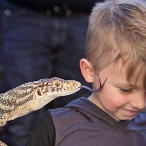 kiss_lizard