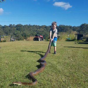 tug of snake