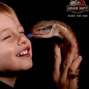 willow_blue_tongue_lizard