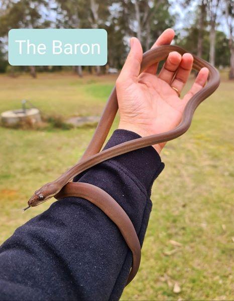 olive Baron