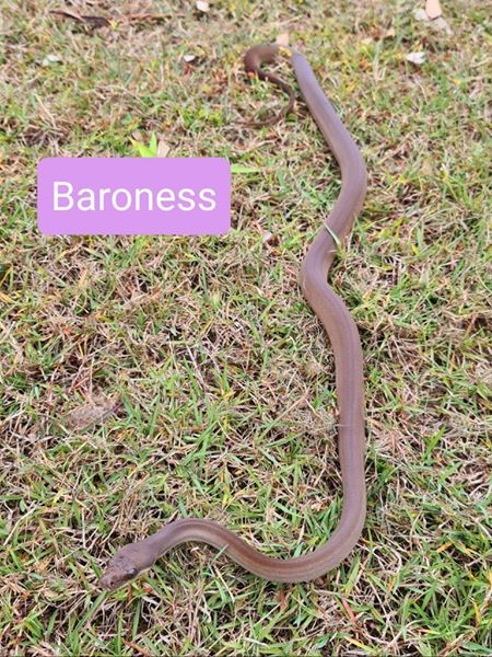 olive baroness